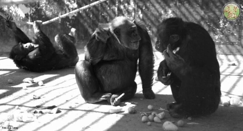 Dani Lulù e Cicocolti in un momento di conversazione