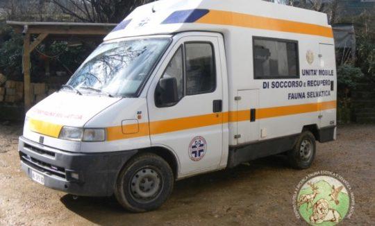 ambulanza_5x1000