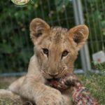Leo a 7 mesi circa