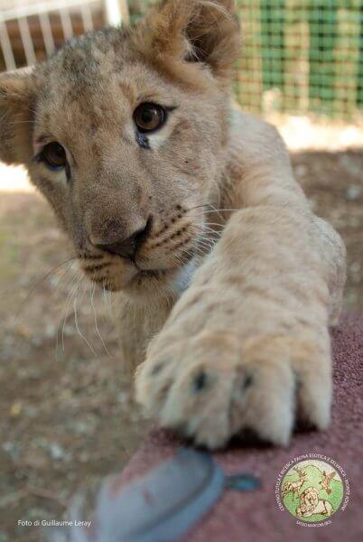 Leo a pochi giorni dal suo arrivo