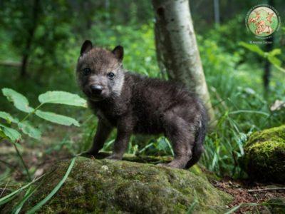 Ulisse ad un mese di età alla scoperta del bosco